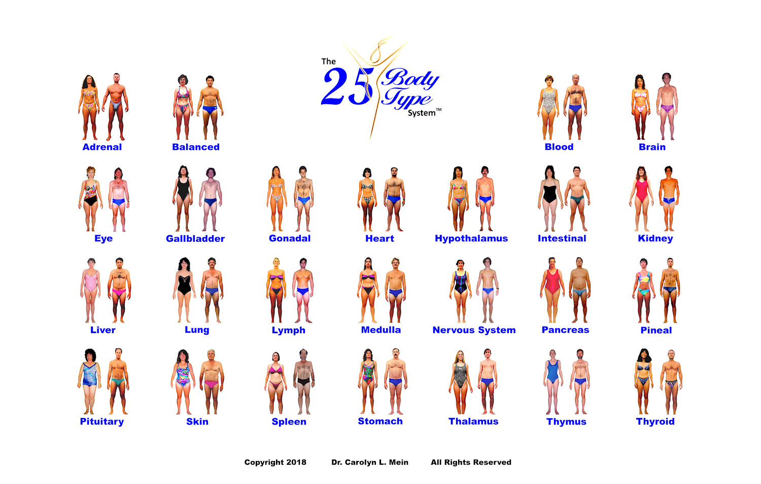 All 25 mens body shapes and womens body shapes