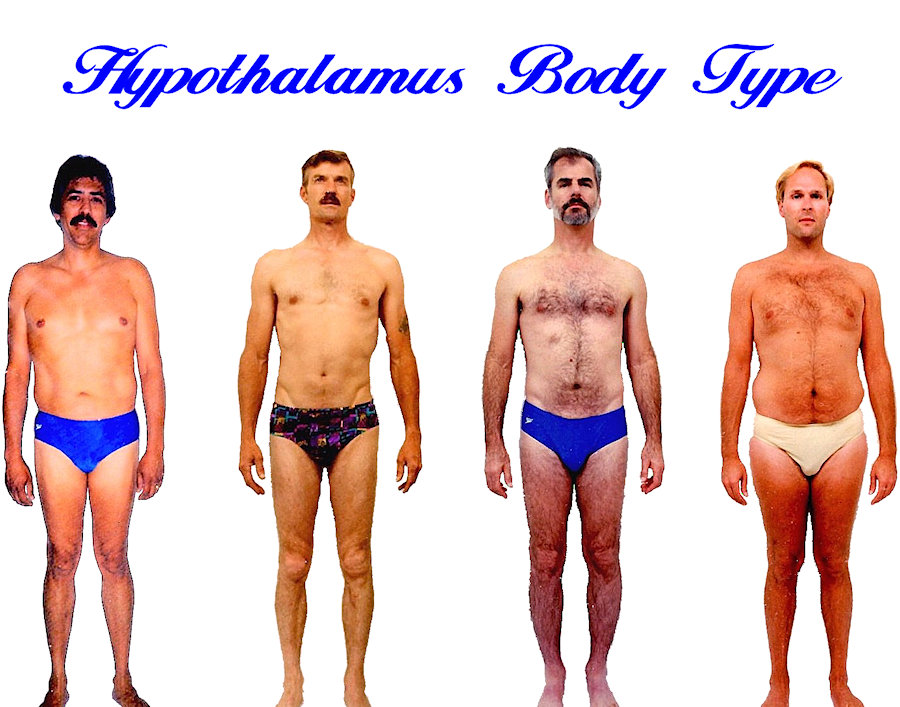 Mens Hypothalamus body shape